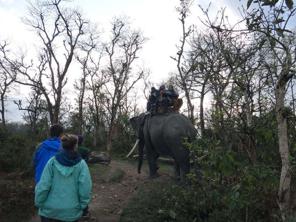 Elephant back safari, Chitwan National Park, Nepal
